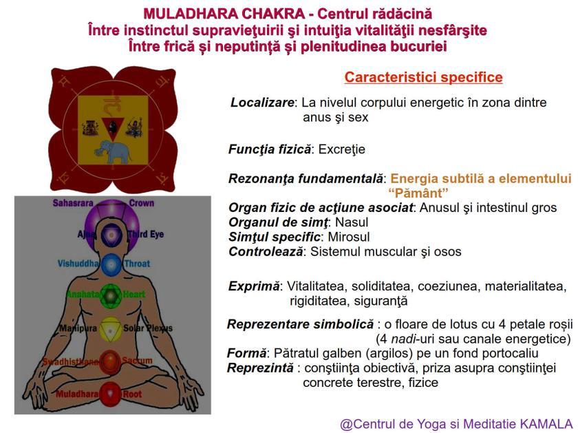 1.MULADHARA CHAKRA bun_1