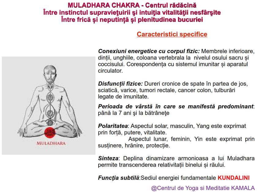 1.MULADHARA CHAKRA bun_3